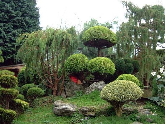 Красивые декоративные растения для сада