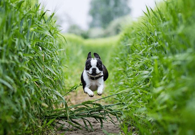 pet in garden
